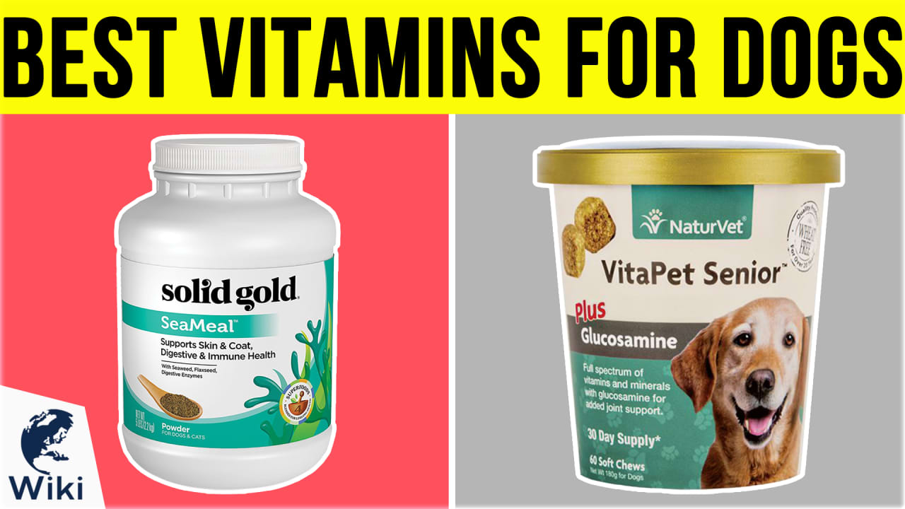 10 Best Vitamins for Dogs