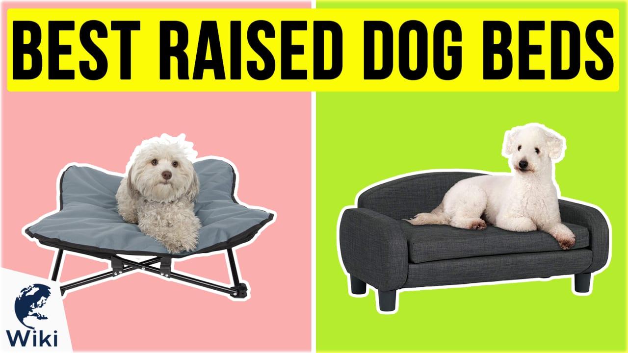 10 Best Raised Dog Beds