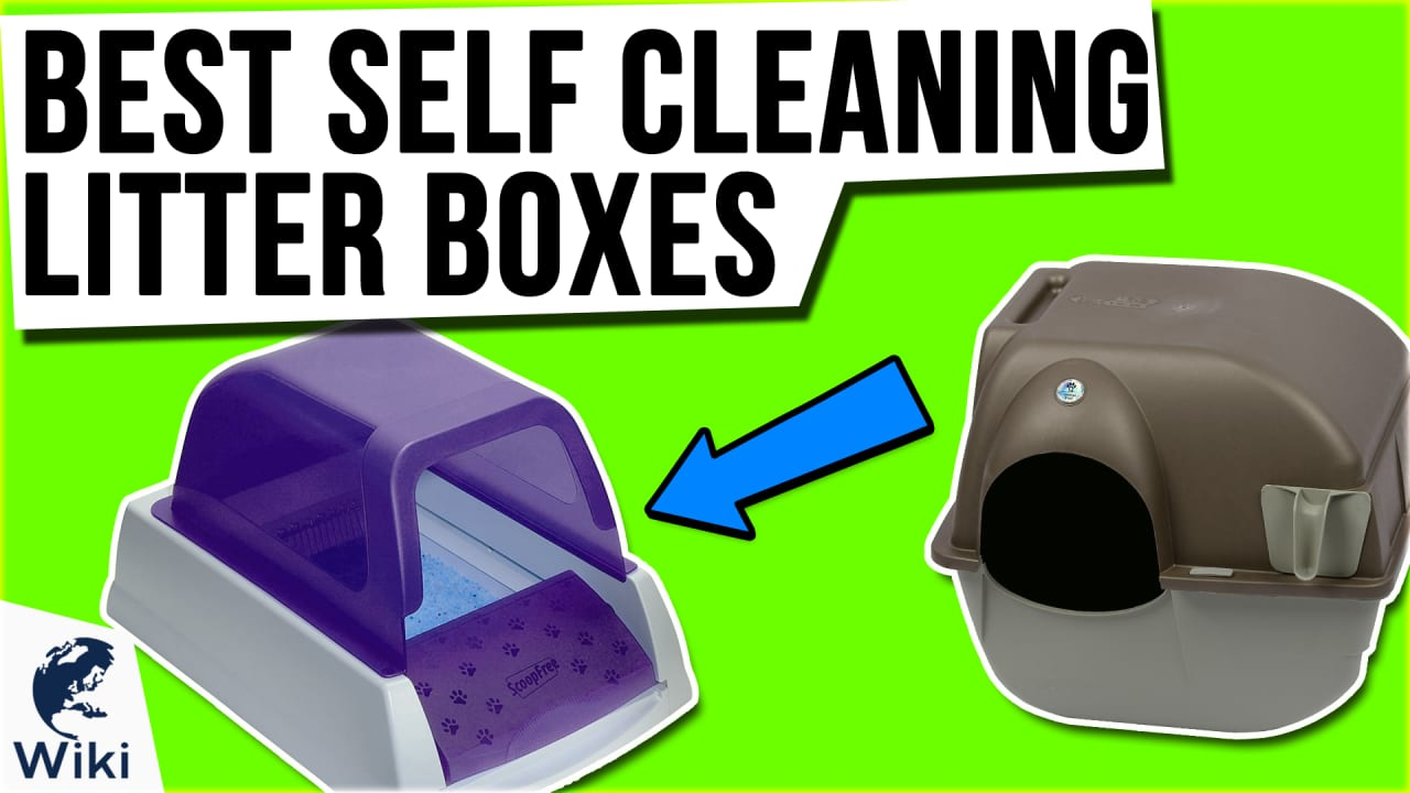 6 Best Self Cleaning Litter Boxes
