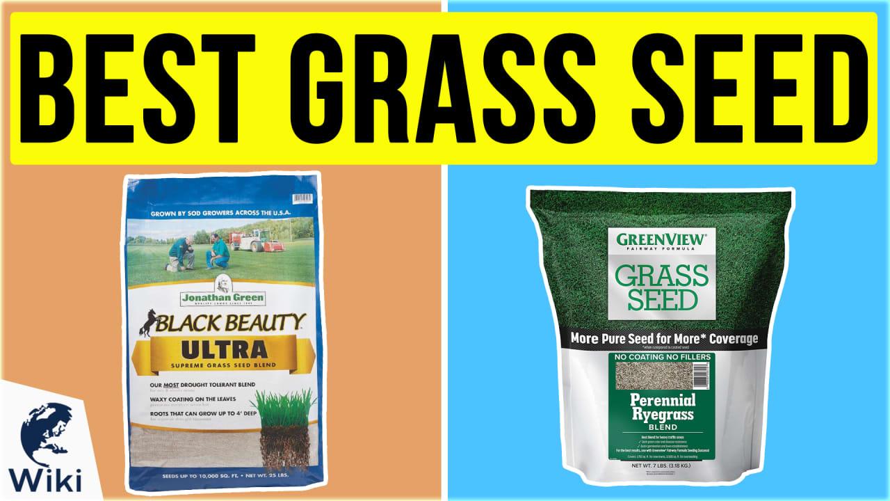 10 Best Grass Seed