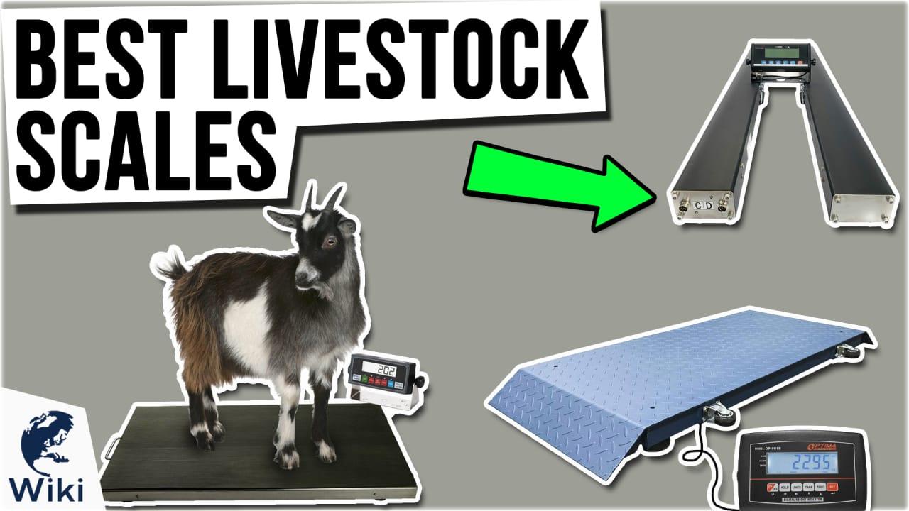 10 Best Livestock Scales