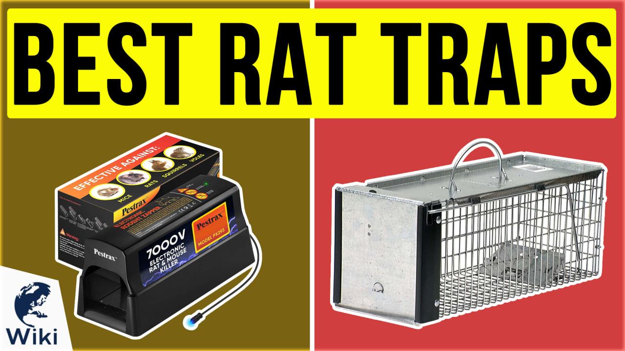 8 Best Rat Traps