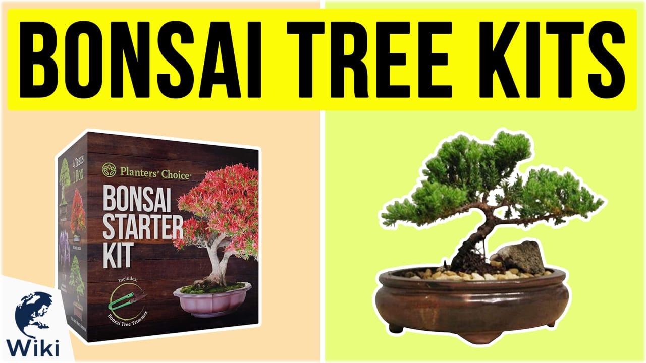 10 Best Bonsai Tree Kits