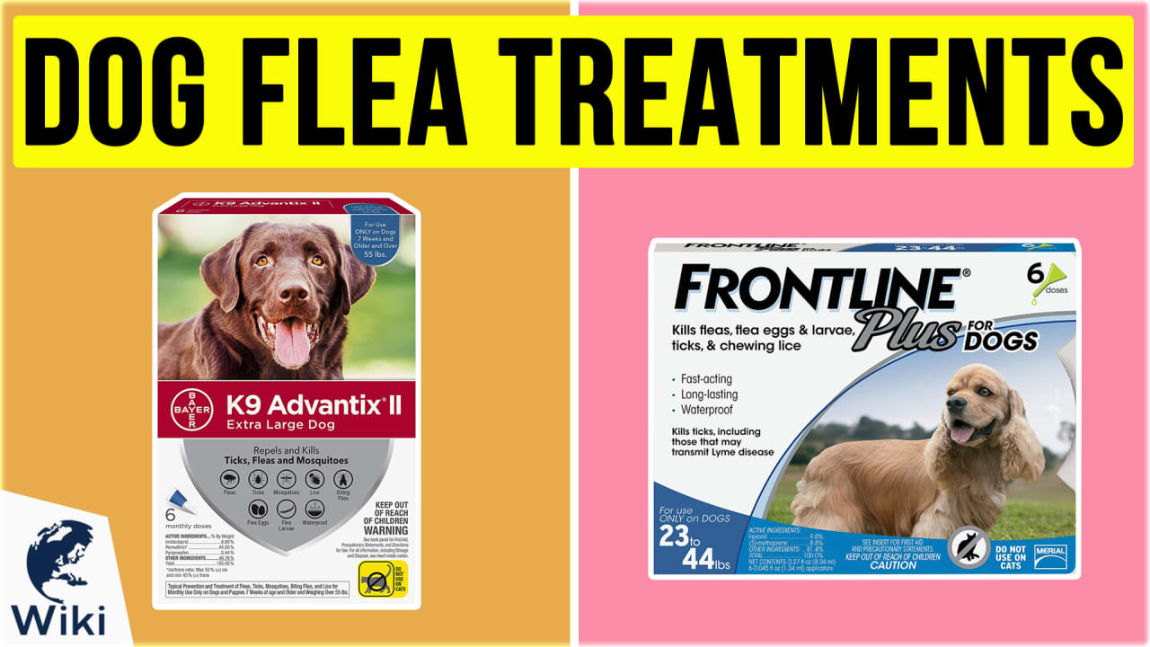 10 Best Dog Flea Treatments