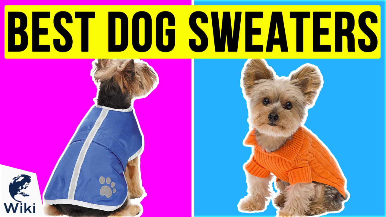 10 Best Dog Sweaters