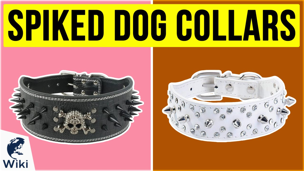 10 Best Spiked Dog Collars