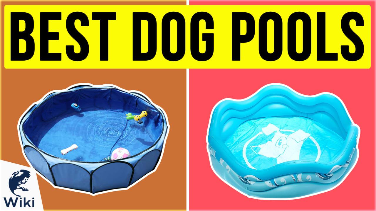 8 Best Dog Pools