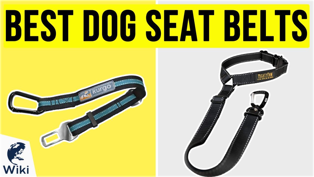 10 Best Dog Seat Belts