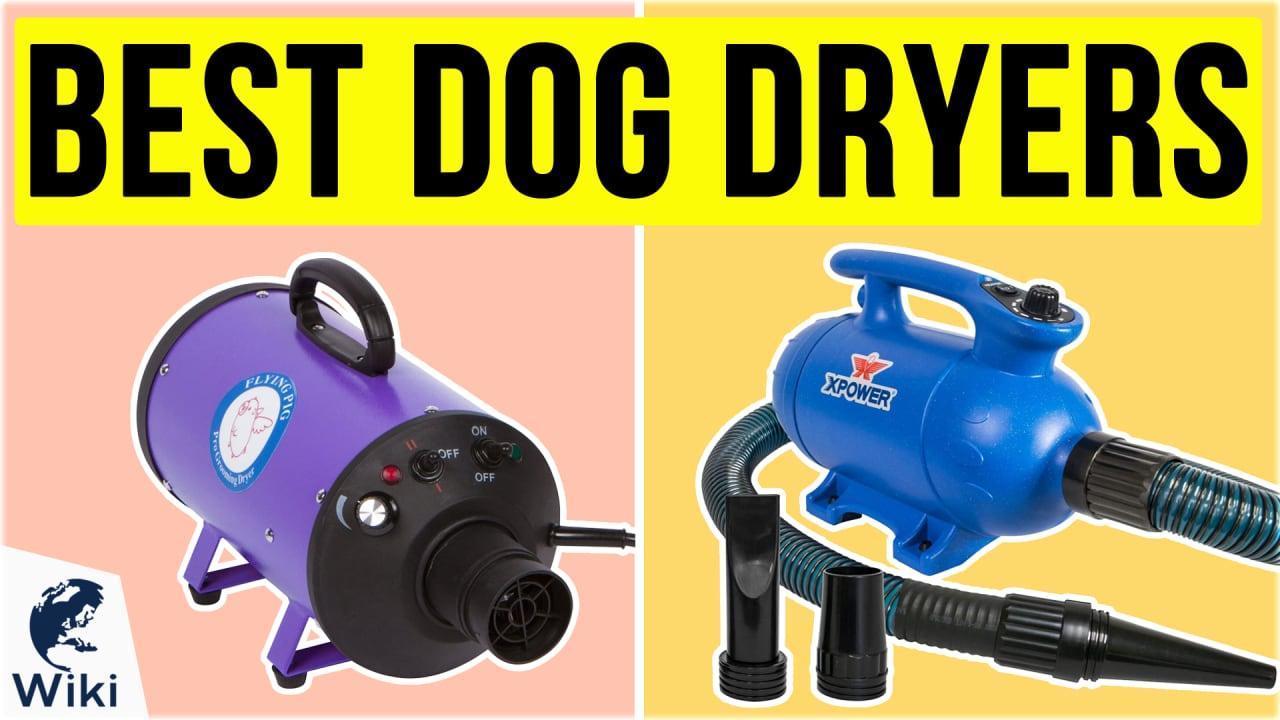 10 Best Dog Dryers