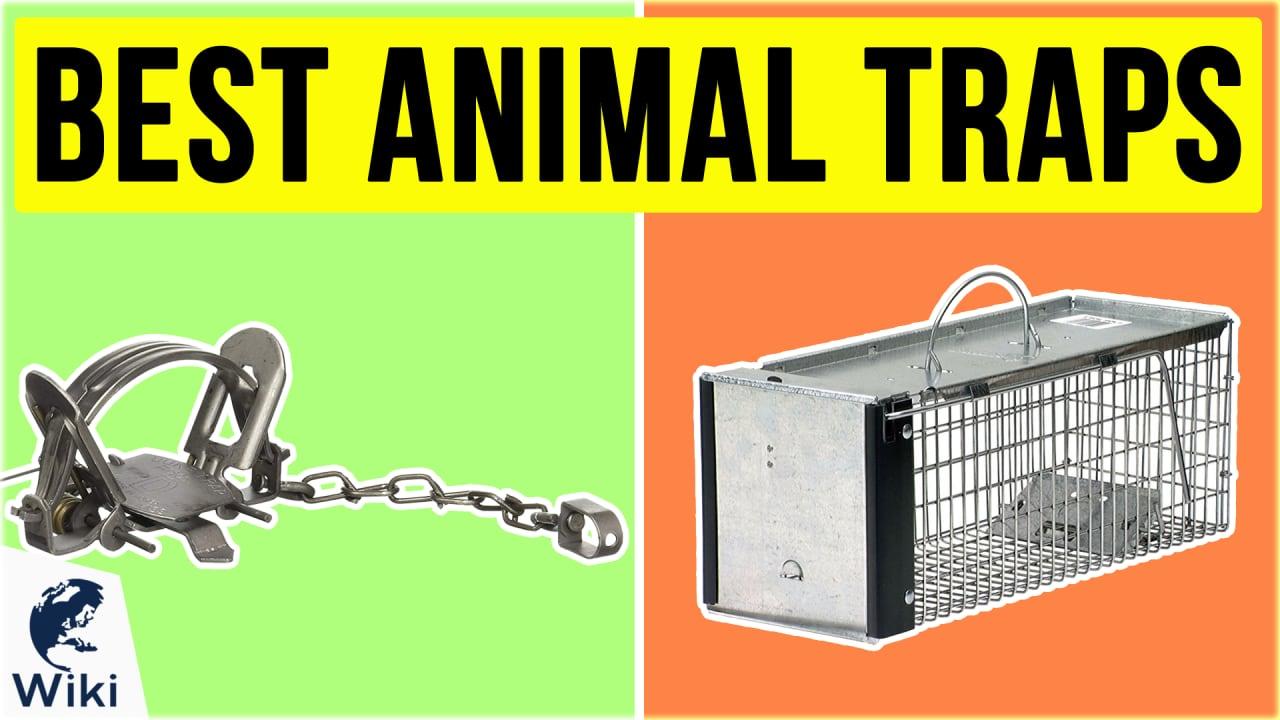10 Best Animal Traps