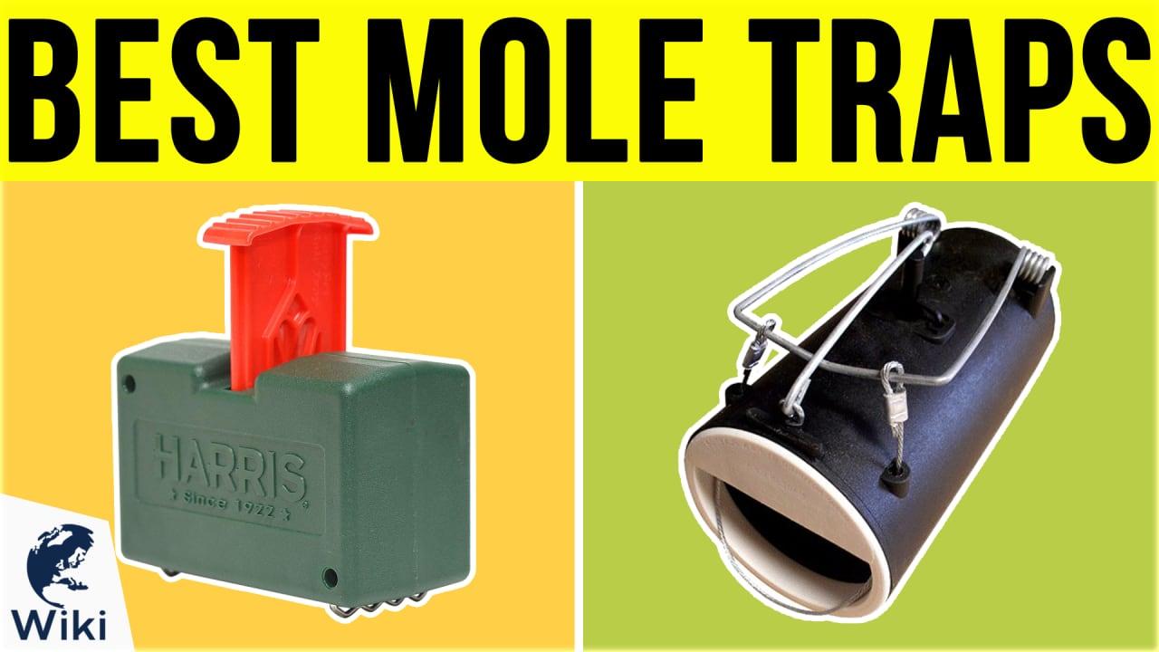 8 Best Mole Traps