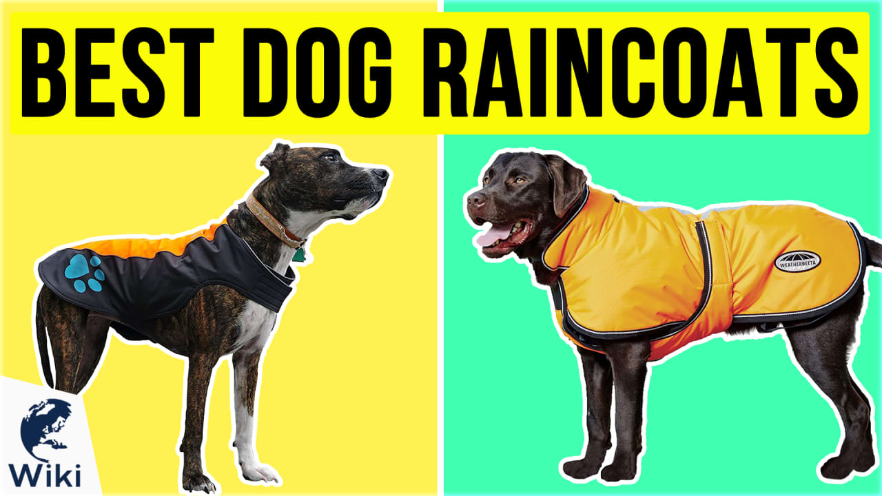 10 Best Dog Raincoats
