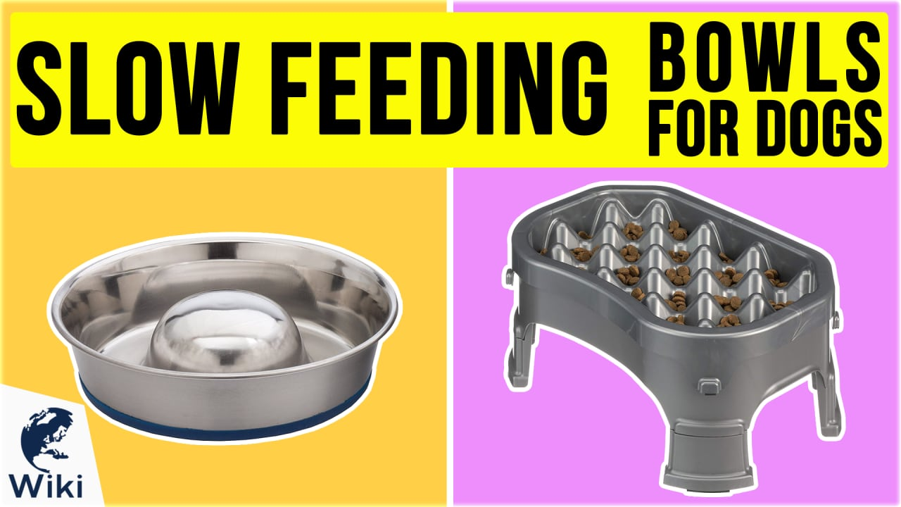 10 Best Slow Feeding Bowls For Dogs