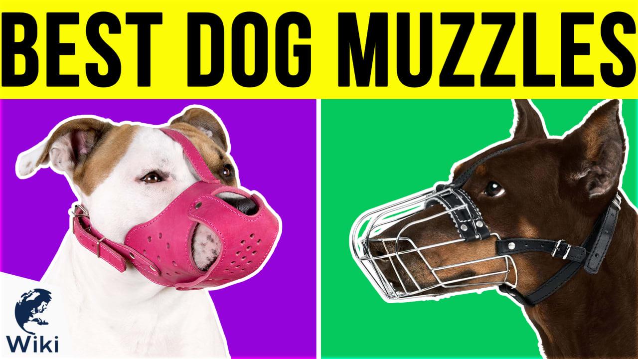 10 Best Dog Muzzles