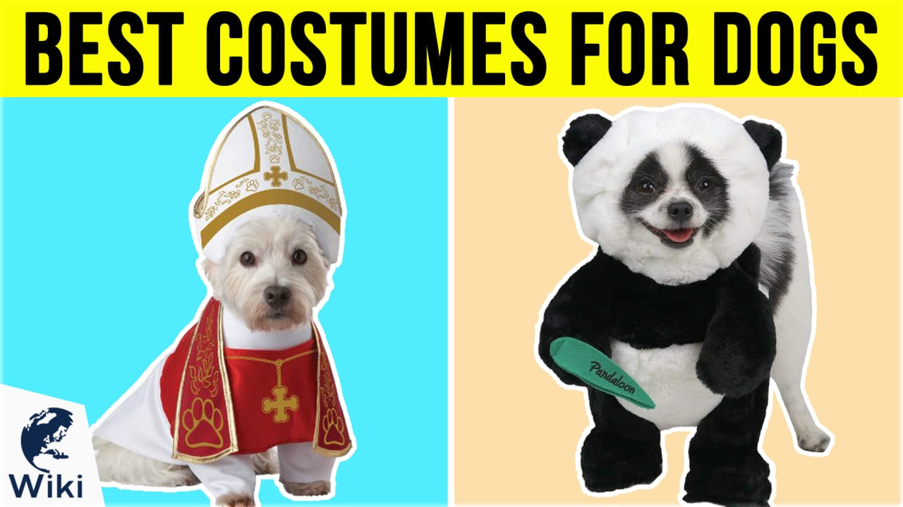 10 Best Costumes For Dogs