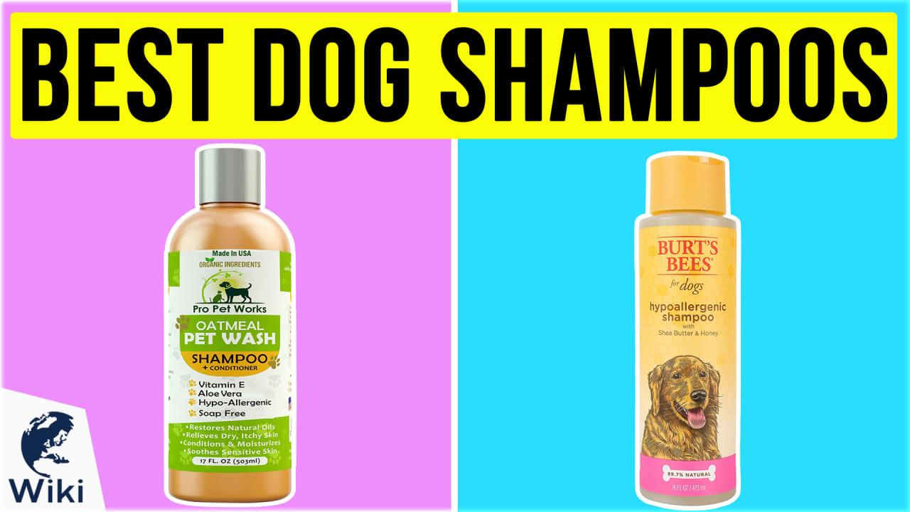 10 Best Dog Shampoos