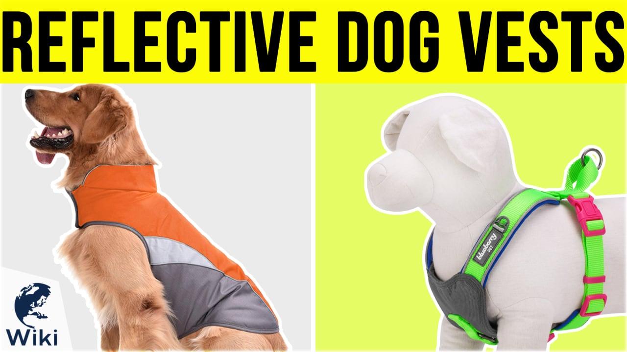 10 Best Reflective Dog Vests
