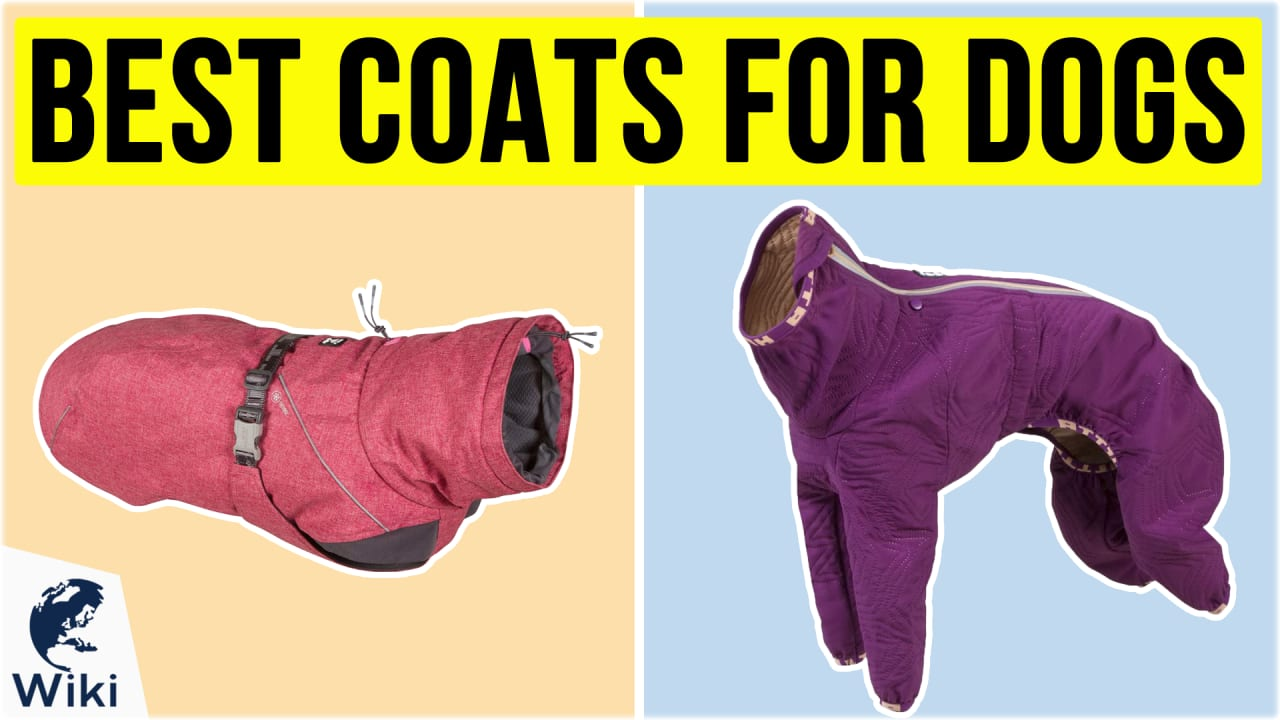 10 Best Coats For Dogs