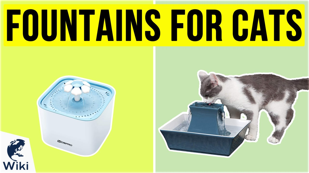 10 Best Pet Water Fountains
