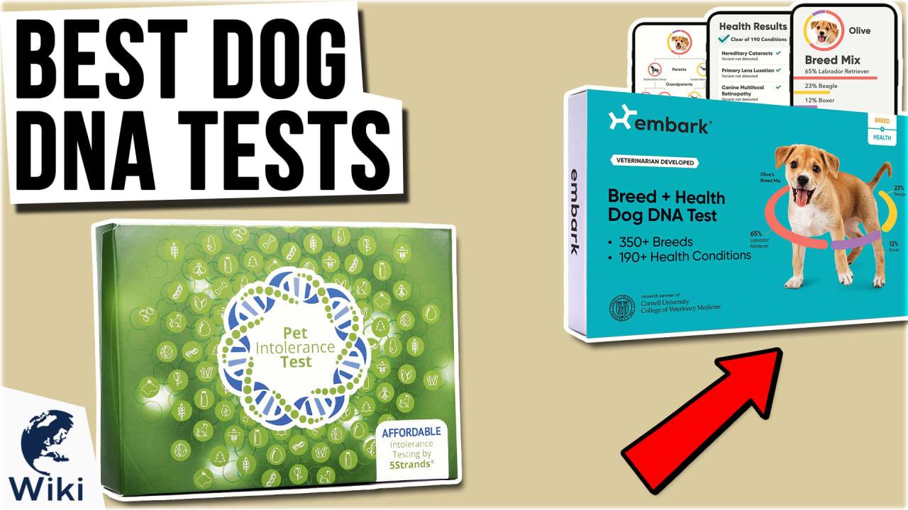 8 Best Dog DNA Tests