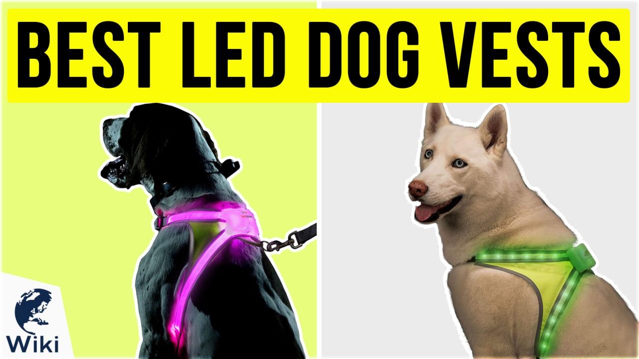 8 Best LED Dog Vests