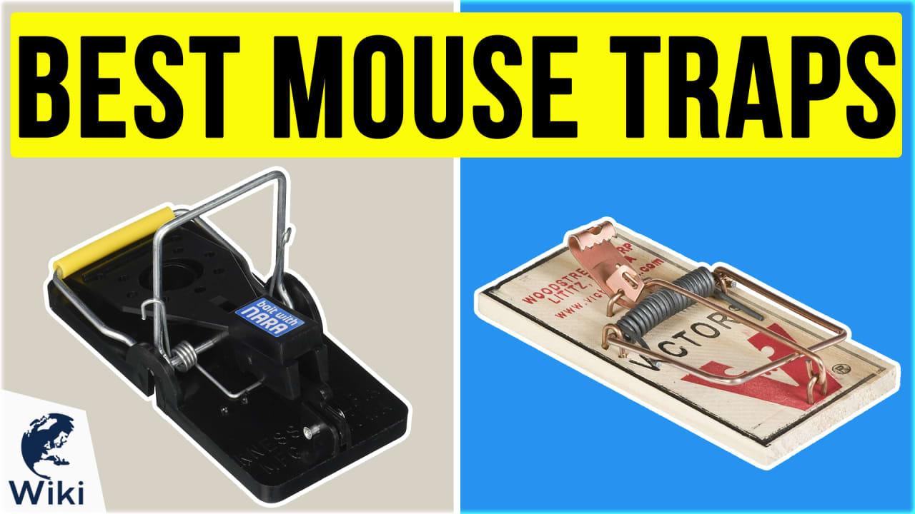 8 Best Mouse Traps