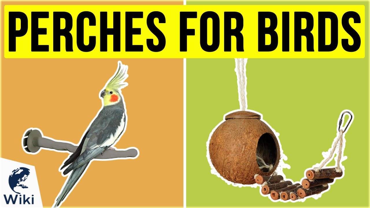 10 Best Perches For Birds