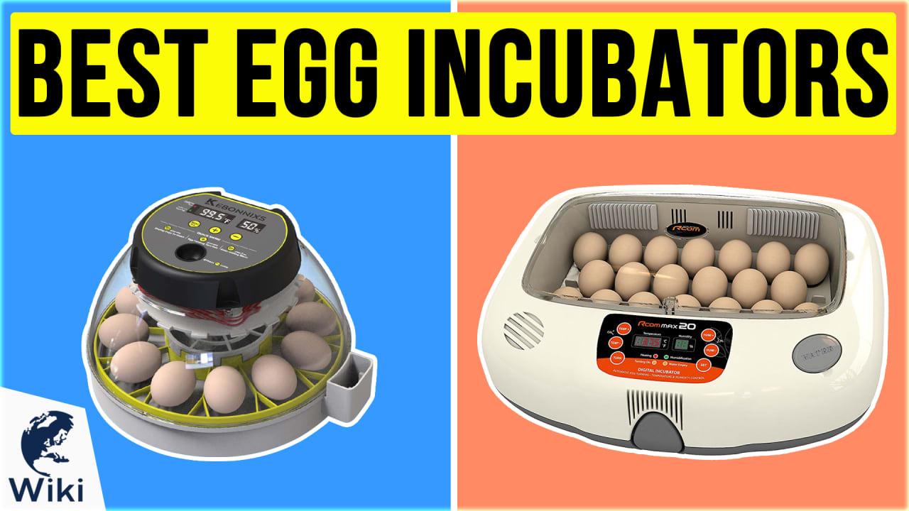 10 Best Egg Incubators