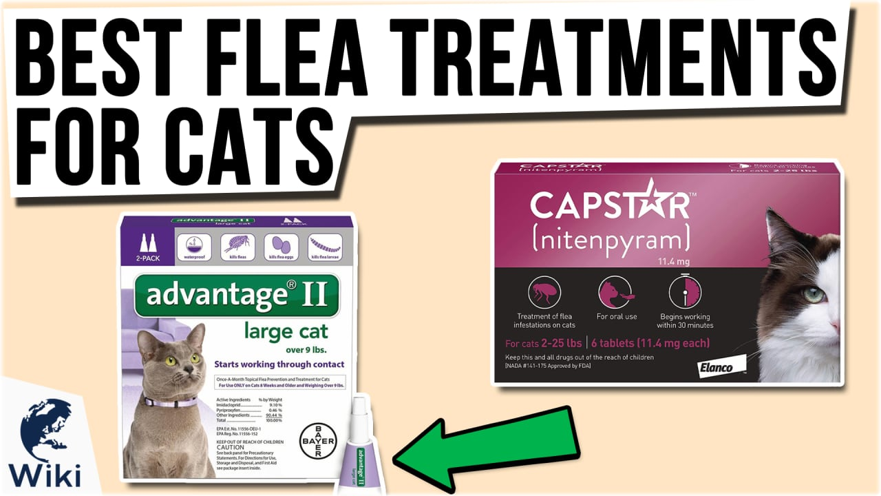 8 Best Flea Treatments for Cats