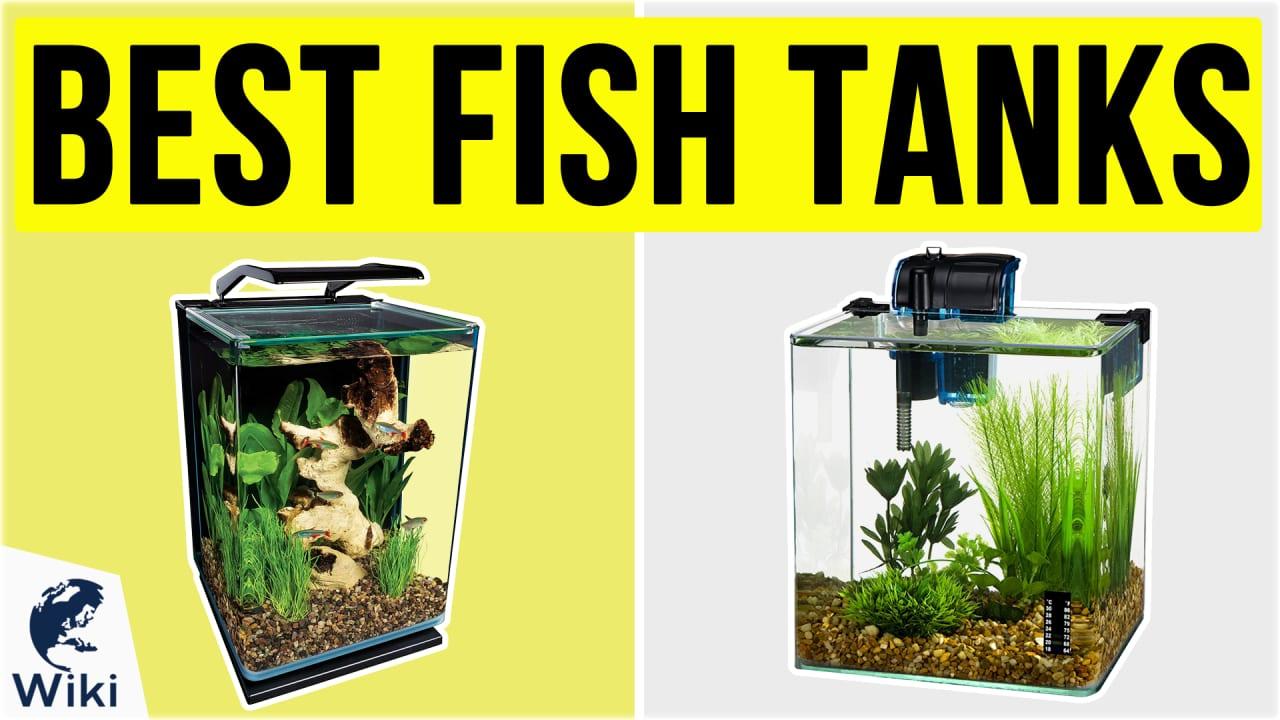 10 Best Fish Tanks