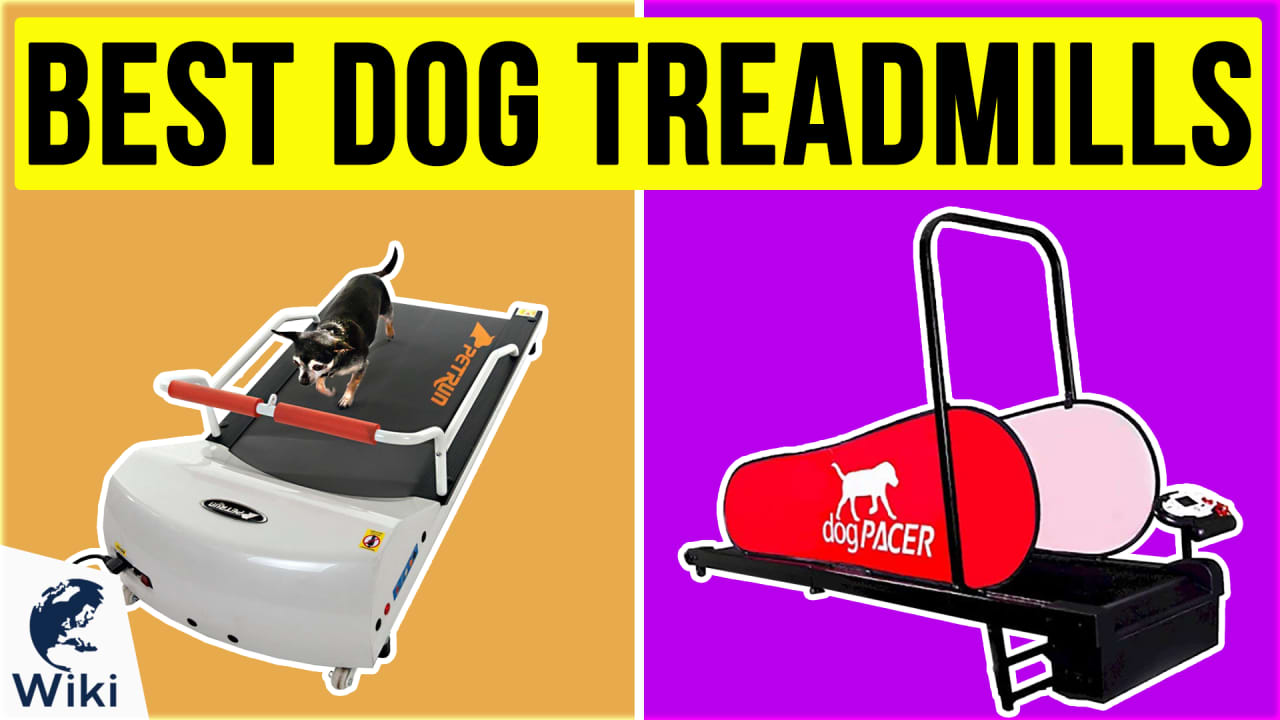 6 Best Dog Treadmills