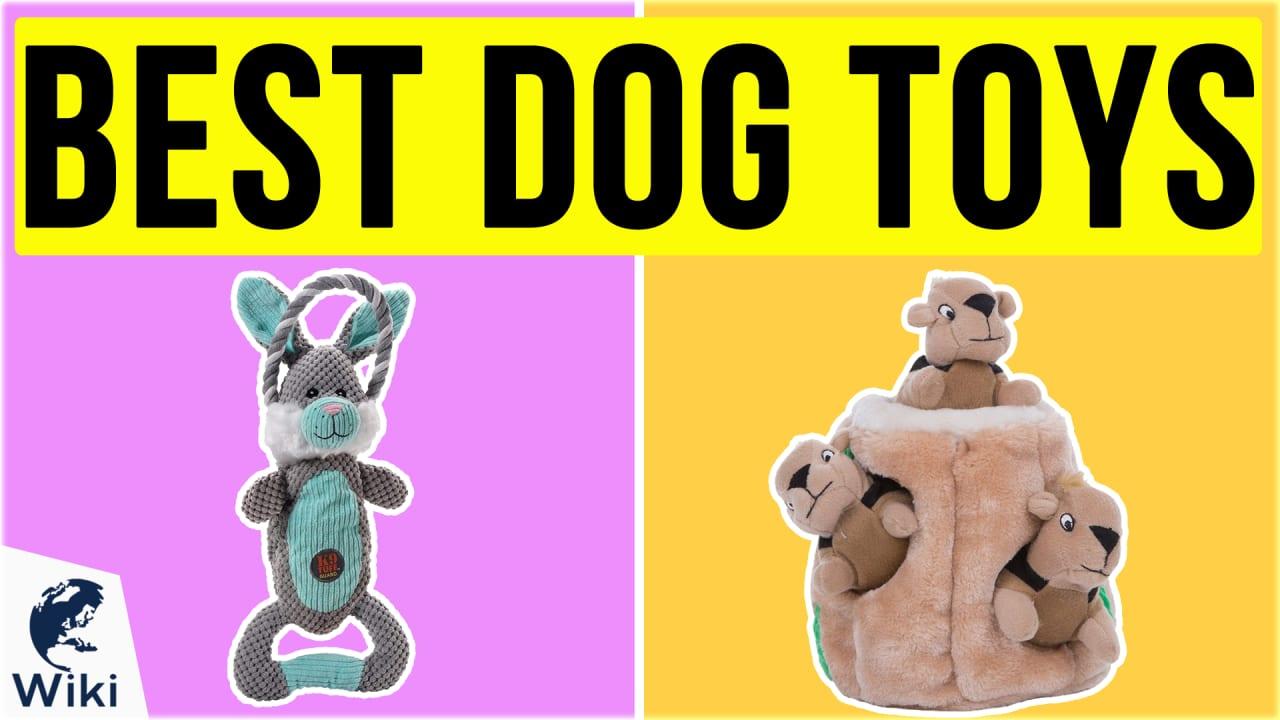 10 Best Dog Toys