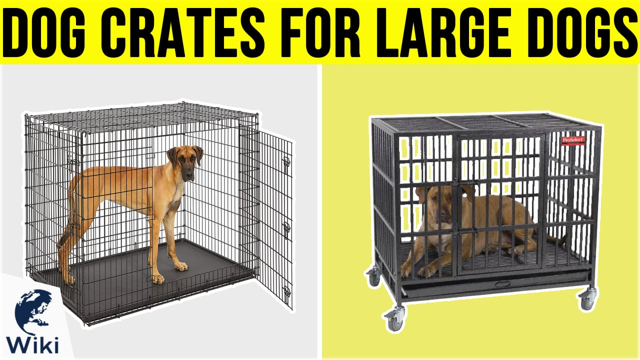 10 Best Dog Crates For Large Dogs