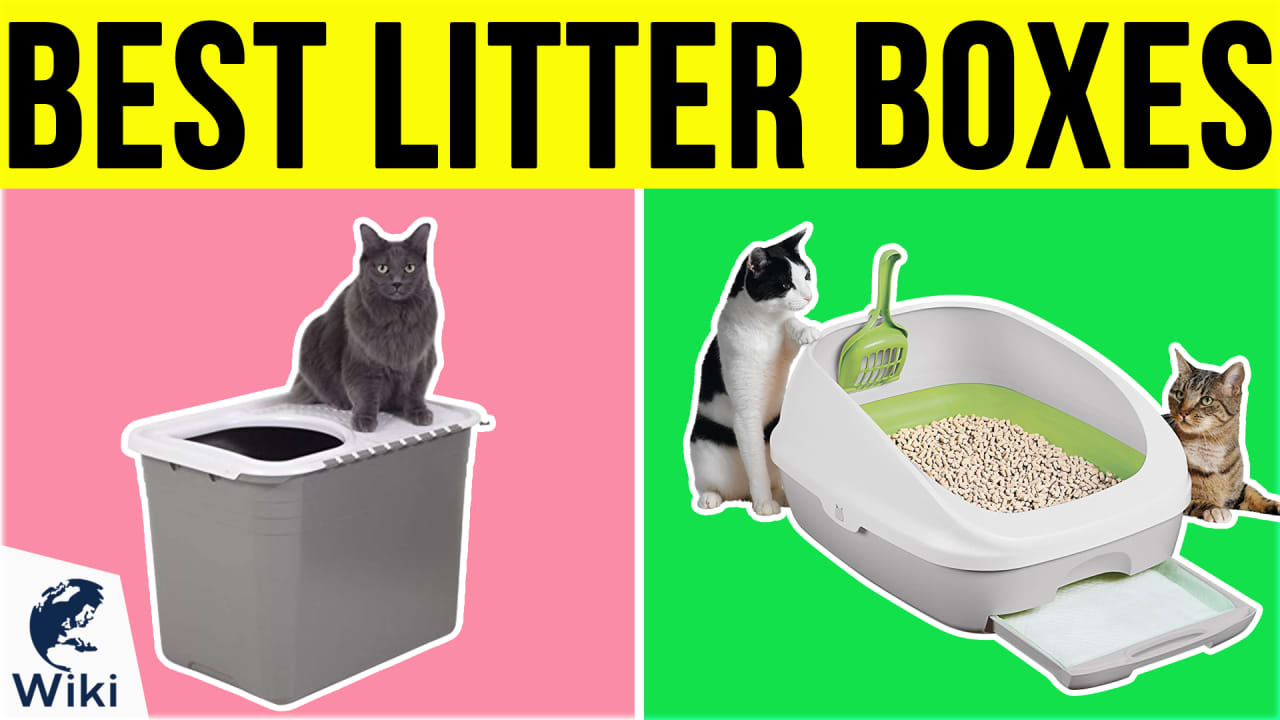 10 Best Litter Boxes
