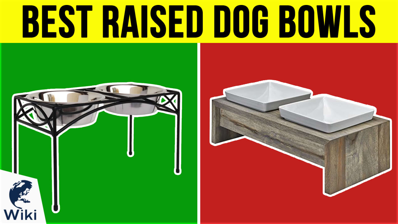 10 Best Raised Dog Bowls