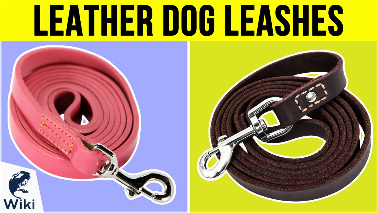 10 Best Leather Dog Leashes
