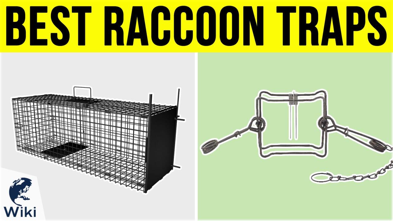 6 Best Raccoon Traps
