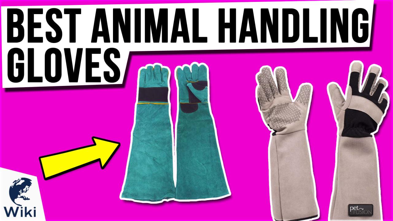 8 Best Animal Handling Gloves