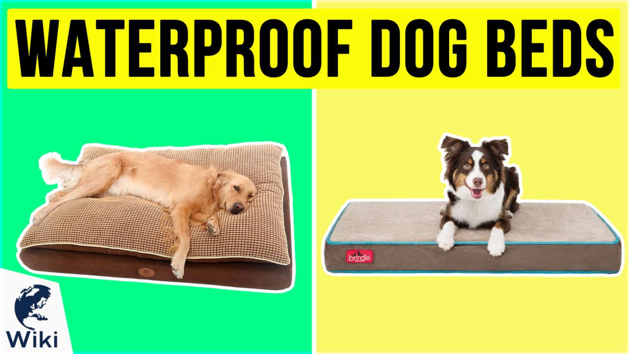 10 Best Waterproof Dog Beds