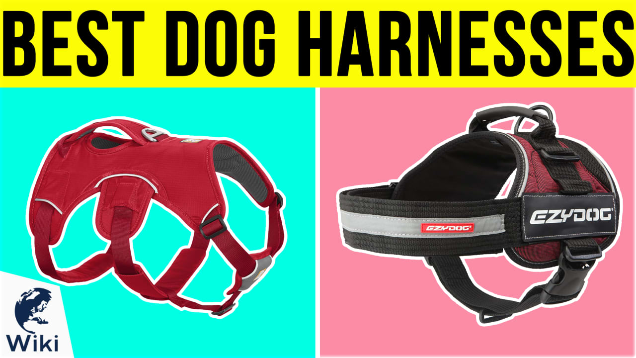 10 Best Dog Harnesses