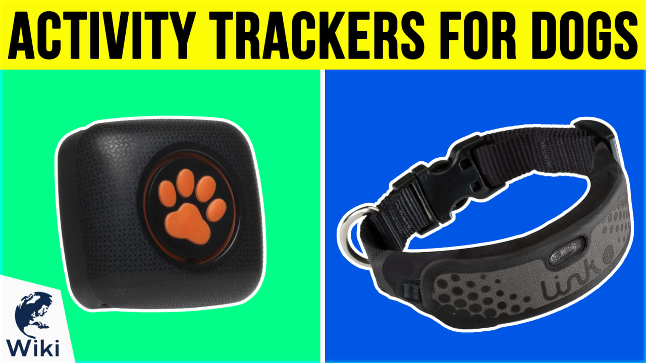8 Best Activity Trackers For Dogs