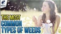 The Most Common Types Of Weeds (Not Marijuana)
