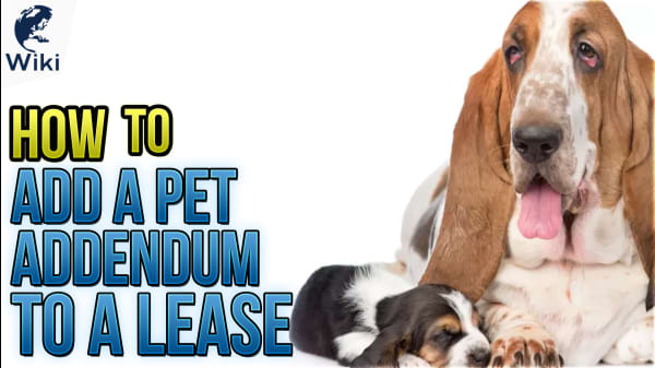 How To Add A Pet Addendum To A Lease