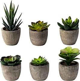 Sophia's Garden Mini Pots
