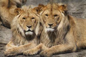 Lion Country Safari @ Lion Country Safari