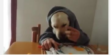 dog eating like human