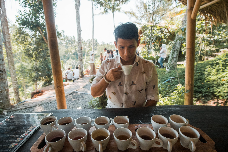 uma pakel tea tasting