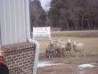 Gentle Shepherd Baptist Church