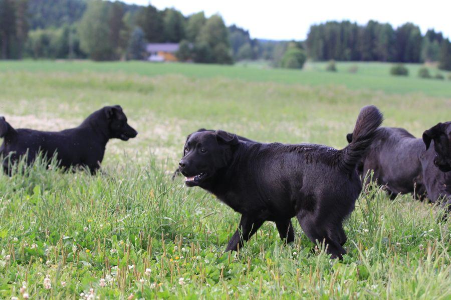 Bildet er tatt av sikkerhetsansvarlig Jonas Falch ved Løken gård.