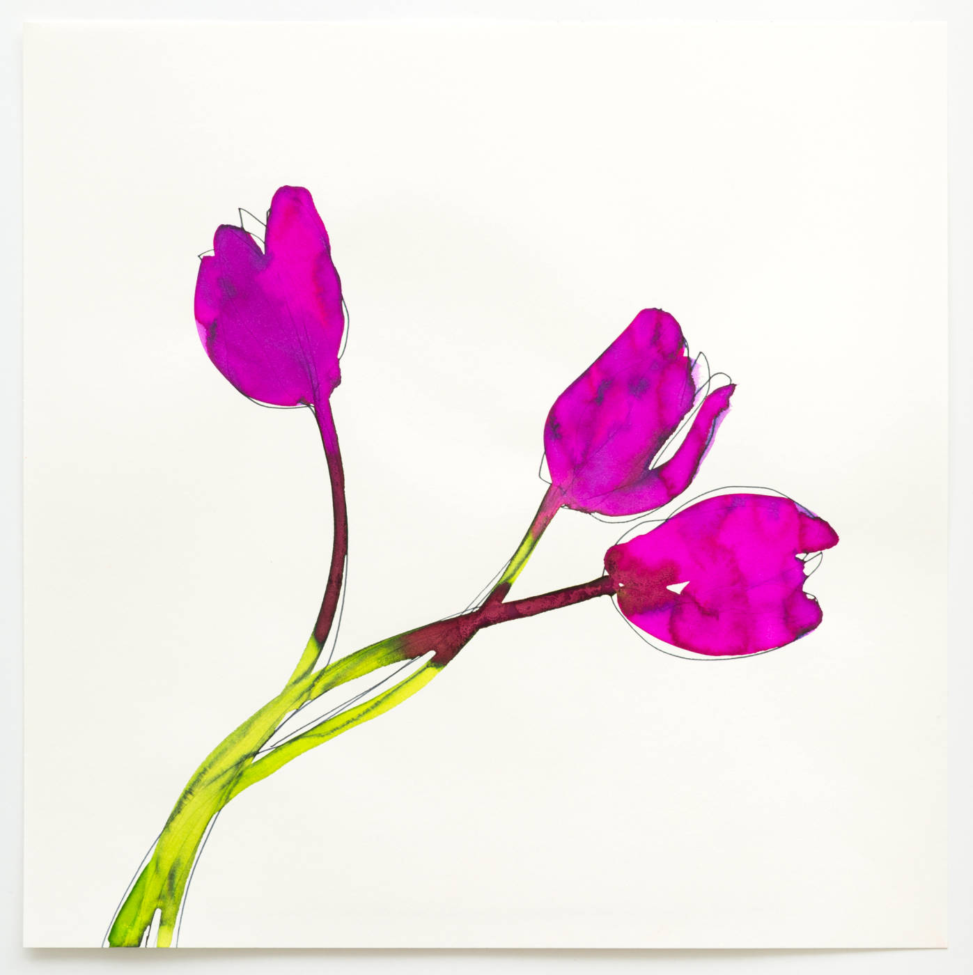 Taurus Tulips